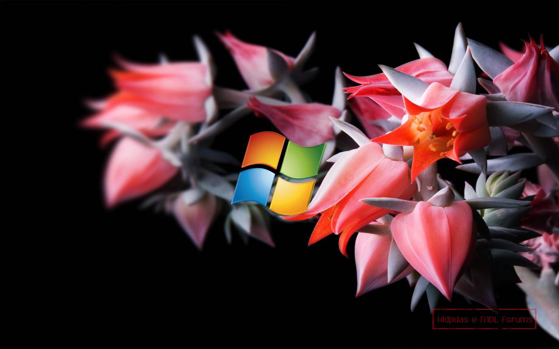 MS Windows 8 Source